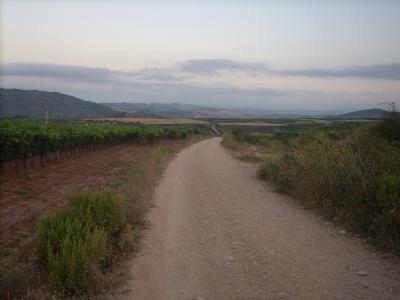szőlőültetvények