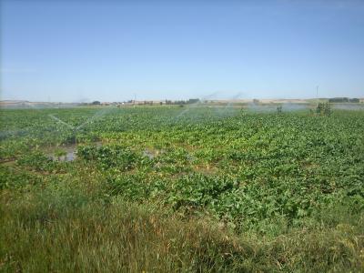 spanyol agrárium